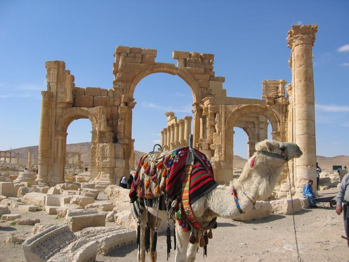 Camel at the Palmyra ruins